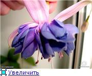ФУКСИИ В ХАБАРОВСКЕ  - Страница 3 D8de92e47902t