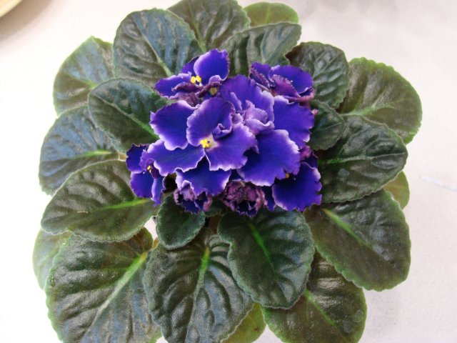 Мои цветочки - Страница 13 B6206ed80da9