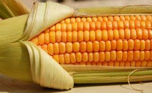 Кукурузная крупа: состав, польза и свойства, кукурузная каша (мамалыга) 1e52f054b0df