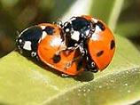 Невероятные факты из жизни насекомых 3bca828d49e3