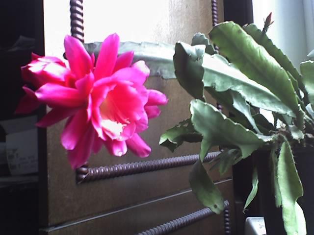 Цветы на наших окнах... 5f39d644b952