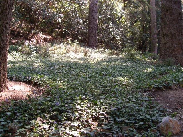 Крым. Никитский ботанический сад. 64ce931b58ad