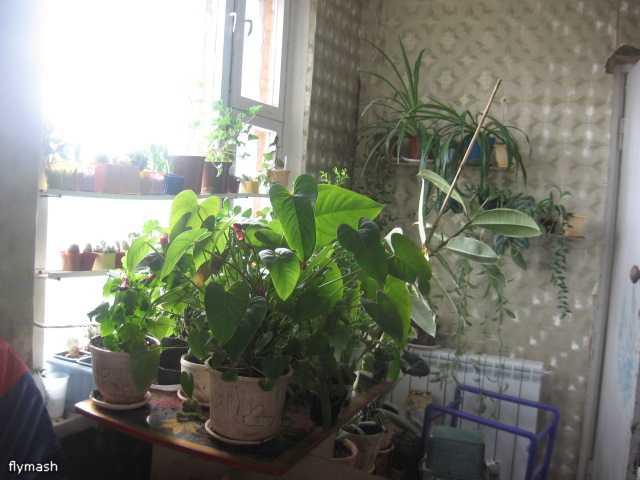 Мои джунгли - Страница 3 F3bc4f9659e6