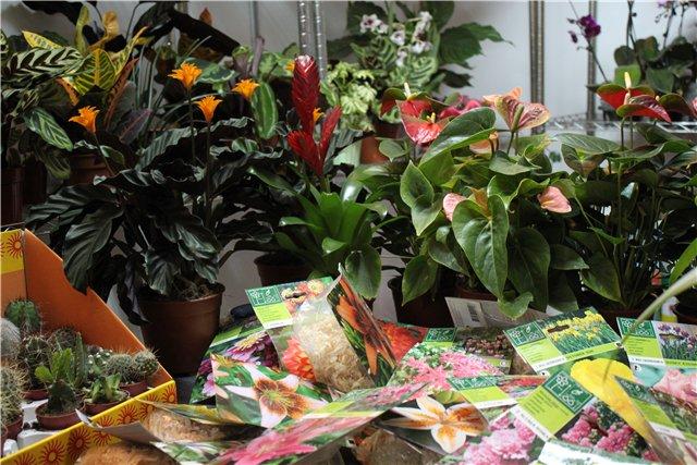 Выставка ландшафт и приусадебное хозяйство 2011, Алматы. Ae73ecf7aad0