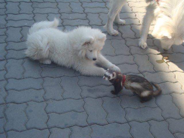 Воспитание щенка В СОЛНЕЧНОМ ГОРОДЕ - Страница 3 383d674324ab