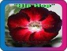 продам семена экзотических растений - Страница 3 22e948b8646a