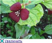 Растения для тени или Тенистый сад. 25e64f4af123t