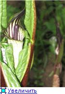 Растения для тени или Тенистый сад. Fb88b1259351t