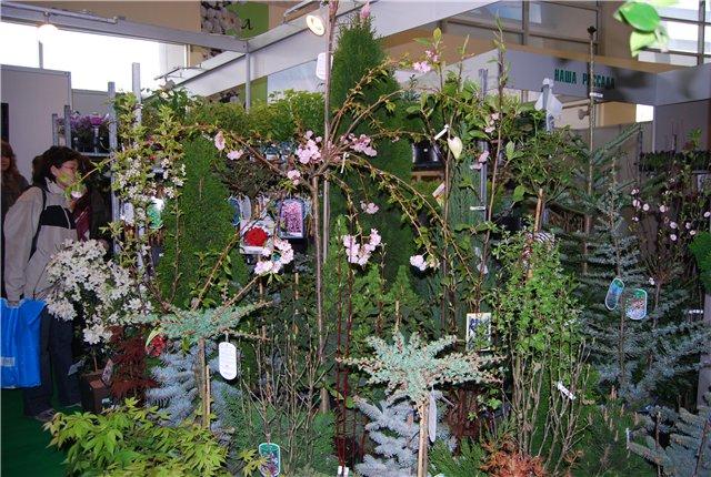 «Цветы.Ландшафт и Приусадебное хозяйство Весна - 2010» - Страница 3 6a2742076999