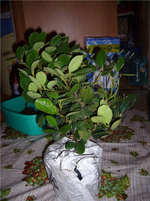 Растения из Сочинского питомника Ff6b1201960f