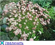 Растения для альпийской горки. Aaaf42ac75aet