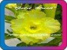 продам семена экзотических растений - Страница 3 8cd32927a5e4
