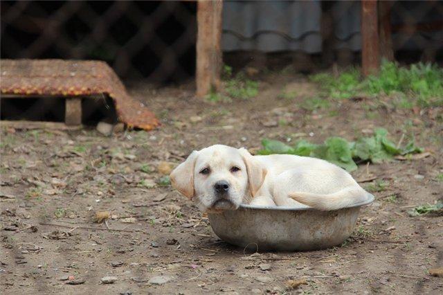 """Питомник """"Прима Персона"""". Мои собаки-моя жизнь! - Страница 2 7d2dd0e2de86"""