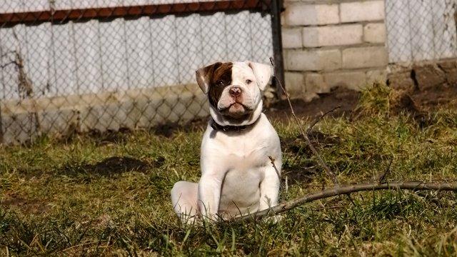 Собаки питомника Carpen Diaz - Страница 2 3733ceb321dc