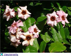 Орхидеи и прочая красота на о. Пхукет - Страница 2 3e4ea1c6e2dbt