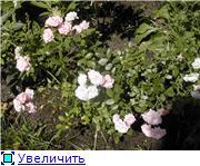 Specially for Karkela )))    Тестирование сербок и проч. 80ad480770fbt