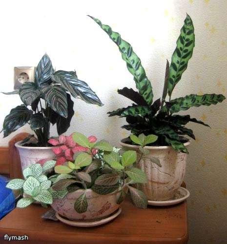 Мои джунгли 1afb5390abc8