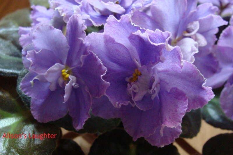 Весеннее  цветение (Хваст от Веры) - Страница 8 5e635ebe080f