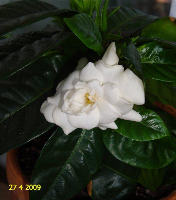 мои любимые цветочки 4e78f8868632