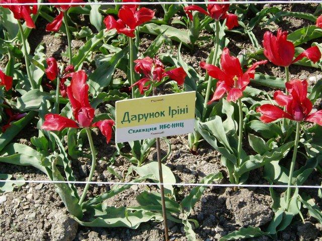 Крым. Никитский ботанический сад. Bbcb365991bb