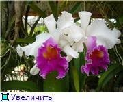 Орхидеи и прочая красота на о. Пхукет - Страница 2 27d25ba9b3d7t