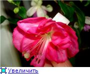 ФУКСИИ В ХАБАРОВСКЕ  - Страница 11 E4850eb4a6act