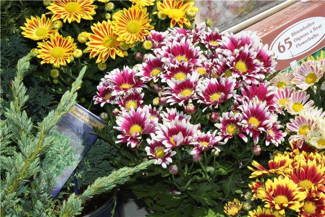 Фестиваль цветов в Алматы - «Алматы – гул кала» 27015693d670