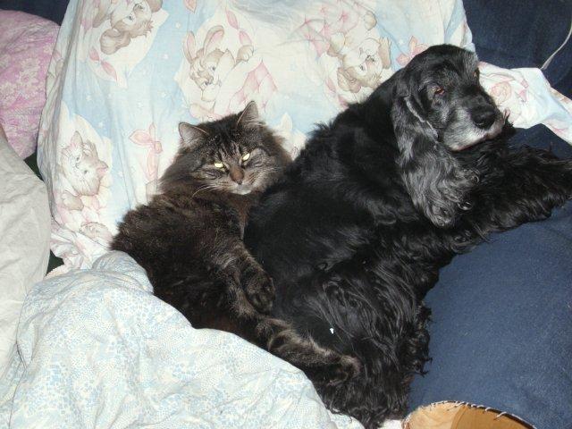 Собаки Татьяны Моисеенковой, кот Мензурка - Страница 3 C8b916a968ac