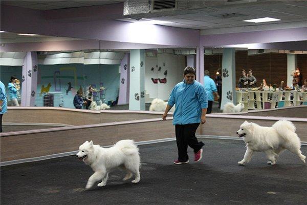 """ПРИГЛАШЕНИЕ НА ОТКРЫТИЕ Центра Спорта, Развлечений и Красоты для Собак   """"DOG AVENUE""""!!! - Страница 2 E99e3ad6e4ee"""