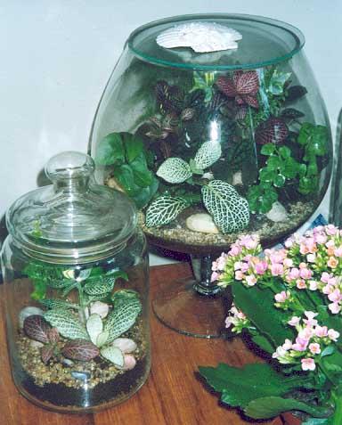 Разводите ли дома цветы и какие? - Страница 19 55b8f3090327