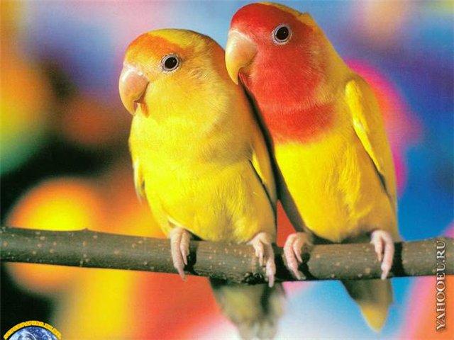Фото птиц E073a05d214e