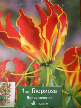 Глориоза Великолепная 2dfc90e103ca