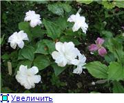 Растения для тени или Тенистый сад. 1cf29573c322t