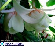 ФУКСИИ В ХАБАРОВСКЕ  - Страница 3 4d846a9d8fcbt