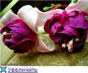 ФУКСИИ В ХАБАРОВСКЕ  - Страница 2 5a6f81508db3t