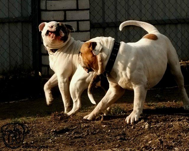 Собаки питомника Carpen Diaz - Страница 2 99dd7d125f76