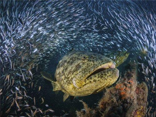 Этот удивительный подводный мир - Страница 2 04f31e5c92f5