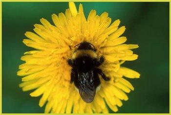 О меде, пыльце др.продуктах жизнидеятельности пчел 936af3311879