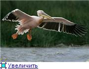 Николаев - город корабелов. 574bf0e963e5t