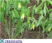 Весенне цветущие Ec0d54bf352bt