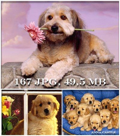 Собаки 794f53468b08