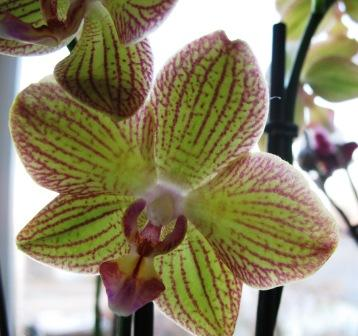 Разведение орхидей. - Страница 11 3c4e7523c47f