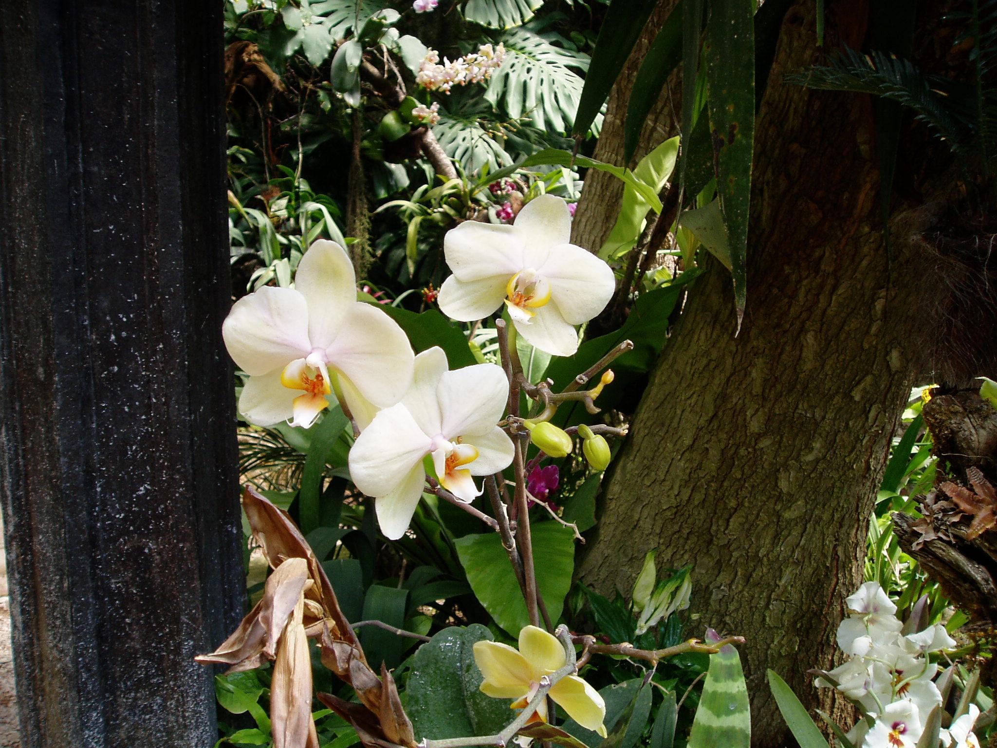 Выставка Орхидей F6845bd4d773