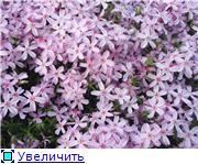 Растения для альпийской горки. 5c9d356e9259t
