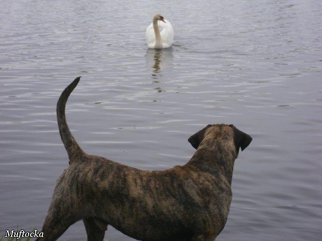Собаки Татьяны Моисеенковой, кот Мензурка - Страница 4 F57c119c18f9