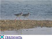 Николаев - город корабелов. 0f222697fca4t