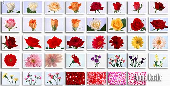 Клипарты  ::  Цветы-разные 438c301d522f