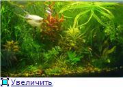 Мои аквариумы. D9e8575f5c14t