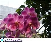 Орхидеи и прочая красота на о. Пхукет - Страница 2 4d1027f3820ct