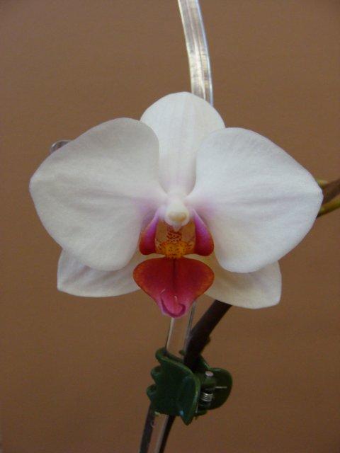 Орхидеи - Страница 4 7a5d3d0dc335